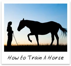How to Train A Horse